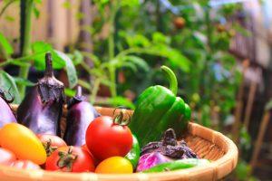 野菜、食物繊維